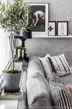 olive tree in home decoration. scandinavian design