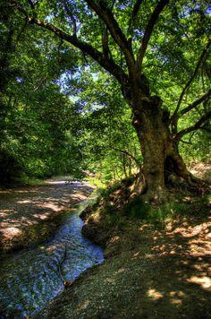 The steam in Prokopi village, Euboea island, west Aegean sea, Greece Mykonos, Santorini, Greek Flowers, I Want To Travel, Thessaloniki, Beautiful Places, Amazing Places, Simply Beautiful, Greece Travel