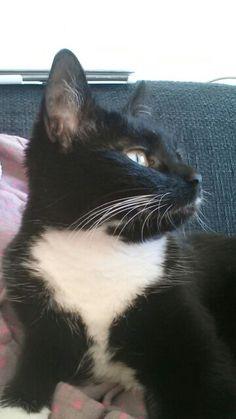 Mijn kat Diva