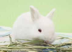 Understand How Rabbits Eat