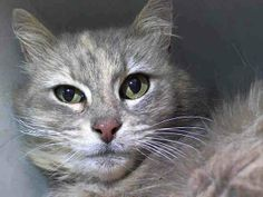 TO BE DESTROYED 5/10/14Manhattan CenterMy name is TUKE. My Animal ID # is A0998839. UPDATE: ***GONE BUT NOT FORGOTTEN***