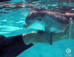 Hope the dolphin having a cuddle with her trainer back in 2011! How adorable is she?!