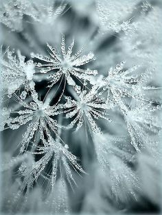 ^Ice flowers