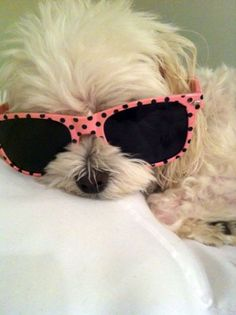 Shaded out maltese