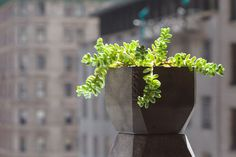 Pothra is a eco-friendly planter made from used coffee grounds by Matthew Waldman of Nooka Uses For Coffee Grounds, Coffee Uses, Ground Coffee Beans, Sustainable Design, Outdoor Life, Horticulture, Potted Plants, Planter Pots, Eco Friendly