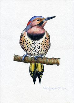 Alabama State Bird Yellowhammer Would Love To Get A