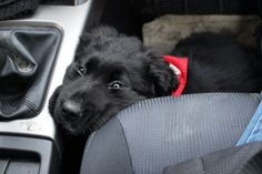 """""""Can I PLEASE drive for a little bit? I promise my paws are equipped for it."""""""