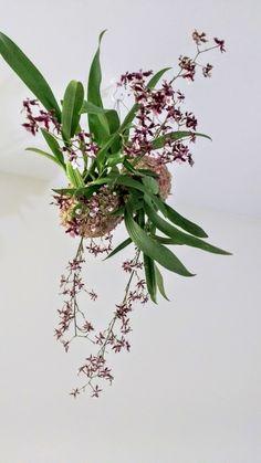 Orquidea+Chocolate+–+Oncidium+Perfumada
