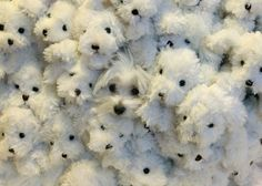 Find the puppy!