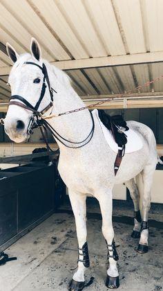 Bonita, Rhaelynn's new horse imported from Spain