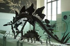 American Museum of Natural History  79th Street and Central Park West  New York, NY •