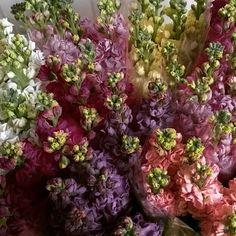 Cabbage, Vegetables, Inspiration, Food, Board, Biblical Inspiration, Essen, Cabbages, Vegetable Recipes