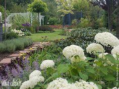 Inner Garden Hydrangeas, Roses, Garden, Plants, Garten, Pink, Rose, Hydrangea Macrophylla, Gardens