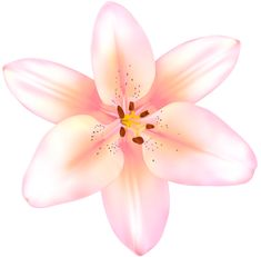 Lily Wallpaper, Flower Designs, Pink Flowers, Flower Power, Clip Art, Rainbow, Projects, Pictures, Image