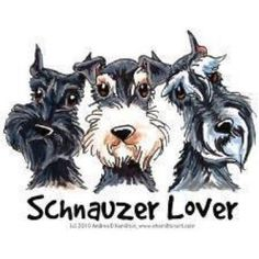 Schnauzers ~ ✞ ♥ I asked God for a Best Friend. He gave Me a Schnauzer. Schnauzer Mix, Schnauzers, Schnauzer Grooming, Standard Schnauzer, Giant Schnauzer, Miniature Schnauzer, Cute Puppies, Cute Dogs, Dogs And Puppies