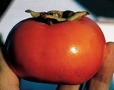 Резултат с изображение за Japanese persimmon Kyungsun-Ban-Si