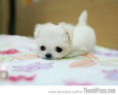 cuteness overloaded...