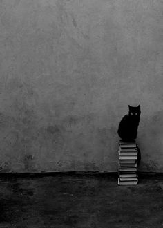 Black Cat with some books. Two of my favorite things!