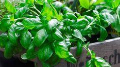 Det kræver faktisk ikke en have, at kunne forsyne sig selv med friske grøntsager, jordbær og krydderurter. En altan eller terrasse kan også bruges.
