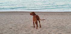 In vacanza con il cane a Marcelli di Numana