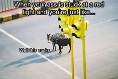 traffic-light-am-I-right funny animal pictures pictures funny Animals