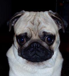 I know my dog is just soooooo cute looking :D