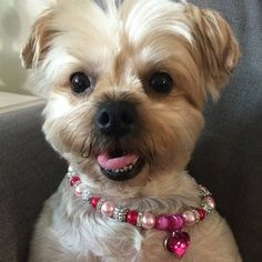LadyY added a photo of their purchase Necklace Sizes, Collar Necklace, Collar Rosa, Pink Dog Collars, Cat Dog, Pink Princess, Cute Baby Animals, I Love Dogs, Cute Puppies