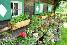 Kleinstübing Freilichtmuseum, Blumenschmuck bei Bauernhaus 'Niggas' aus Mooskirchen, Stmk.©