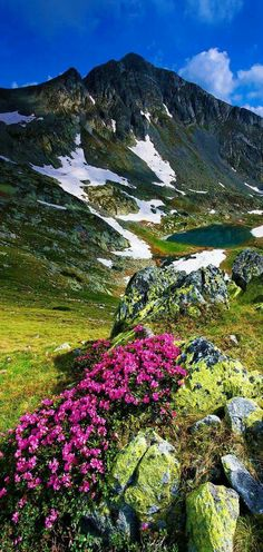Amazing View of Rhododendron in National Park Retezat, Romania - Discover Amazing Romania through 44 Spectacular Photos Wonderful Places, Beautiful Places, Beautiful Pictures, Amazing Places, Places Around The World, Around The Worlds, Landscape Photography, Nature Photography, Film Photography