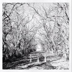 Black & White Nature Tunnel