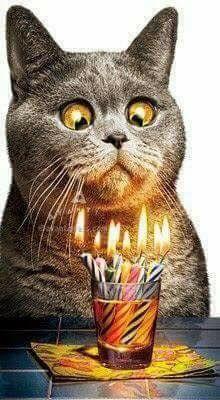 Não se assuste como esse gato,com tantas velas rsrs