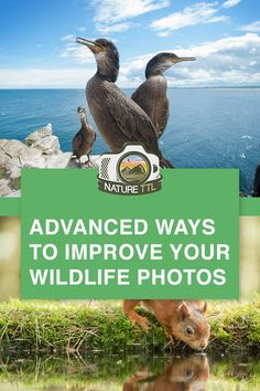 Want to take your wildlife photos to the next level? In this wildlife photography tutorial you will learn 7 advanced techniques for wildlife photographers and improve your nature photos. Wildlife Photography Tips, Photography Essentials, Photography Career, Photography Articles, Photography Filters, Photography Basics, Photography Tips For Beginners, Photography Lessons, Underwater Photography