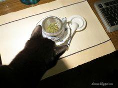 Pakamera: Herbaciane aromaty
