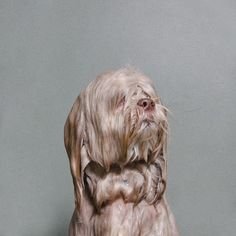 http://www.fubiz.net/2014/05/31/wet-dogs-funny-series/