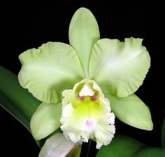 Blc. Ports of Paradise x Fortune by David in SWGA, via Flickr