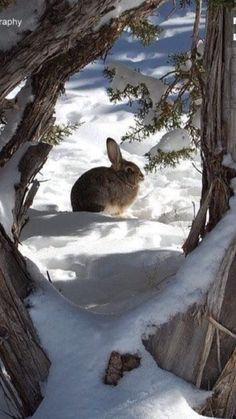 Snowy Winter Rabbit.