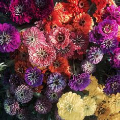 Zinnia Rainbow Bouquet, Fall Arrangements, Zinnias, Floral Wedding, Annie, Planting Flowers, Knot, November, Colors