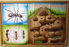 Ants, ants everywhere - Wszędzie mrówki