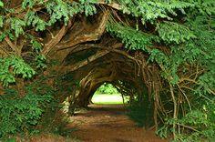 Aberglasney Gardens by Bwthyn Gwarcwm, via Flickr