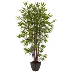 Nearly Natural 6' Bamboo Silk Tree with Planter (145 CAD) ❤ liked on Polyvore featuring home, home decor, floral decor, nearly natural, tree pots, tree planter, nearly natural silk flowers and inspirational home decor