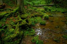 Photograph Deep Black Forest by Ralf Thomas on 500px