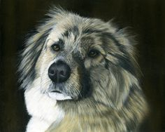"Wylie - Rescued from Afghanistan by NOWZAD. Now living happy and safe in the UK. Pastel on Pastelmat. Size 10""x8"" A pastel pet portrait this size is £80 ($130 US) Commissions taken.  Prints and Greeting cards available from FIne Art America. www.facebook.com/sarahspetportraits.1"