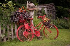 red-painted bicycle with plants / for the old junky bicycles ready for the junk yard.