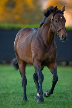 ENCOSTA DE LAGO (Aus) B c 1993, Fairy King (USA) - Shoal Creek, at sunrise. Coolmore Stud, NSW.