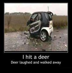 Deer 1, Car 0