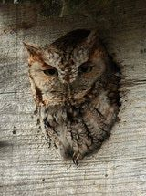 Adding an owl box to your backyard can help attract these raptors.