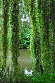 The Beth Chatto Gardens, Essex, UK