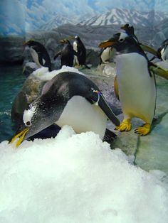 Snow could be found at the TN Aquarium this past winter even though there wasn't much outside in Chattanooga.