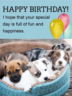 Cute Puppies Animal Birthday Card