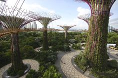 Singapore's 'Gardens by the Bay,'